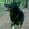 Нужна помощь в воспитании щенка - последнее сообщение от VikVikls